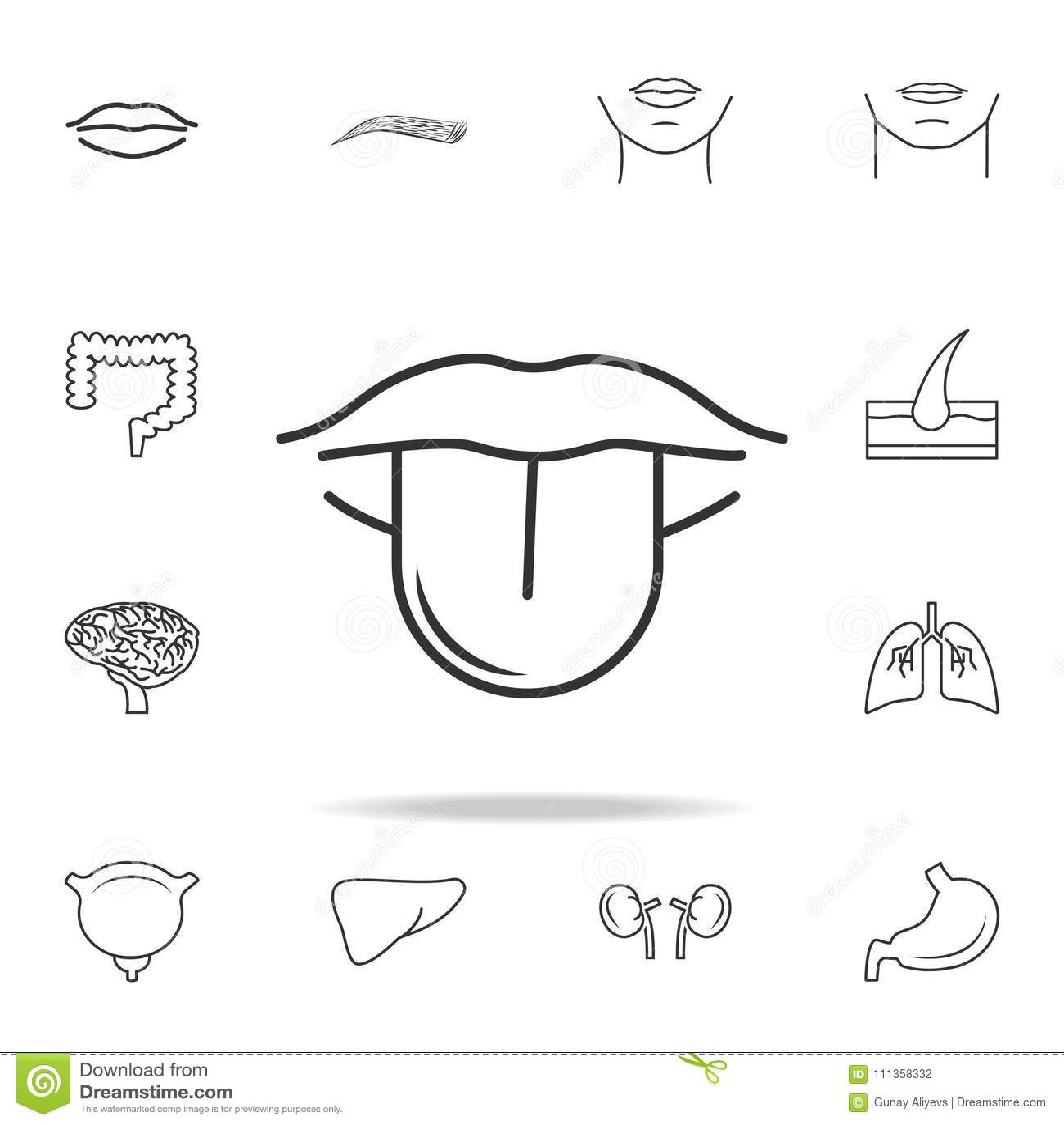 Human Anatomy For Kids Vector Illustration