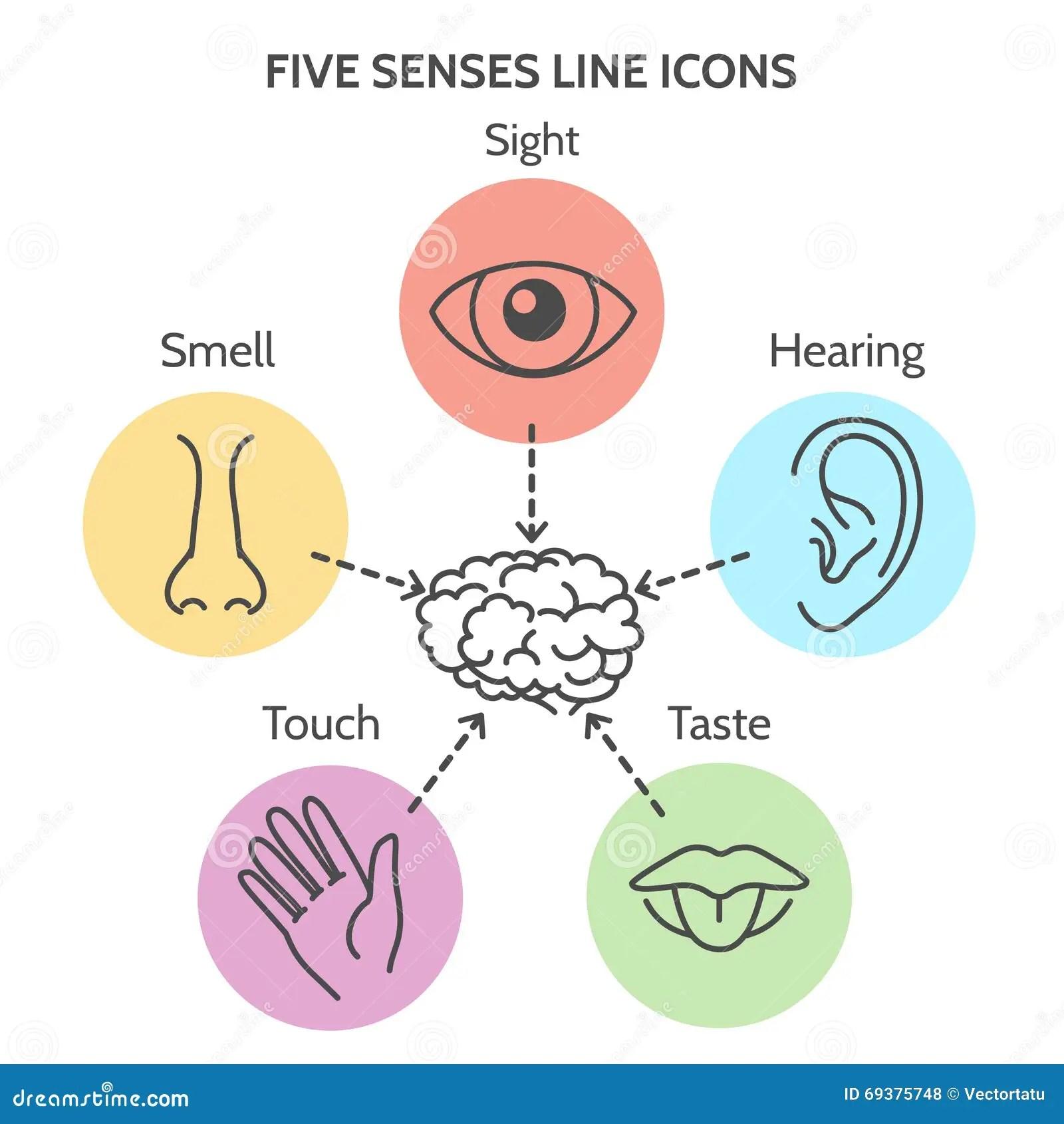 Linea De Cinco Sentidos Iconos Ilustracion Del Vector
