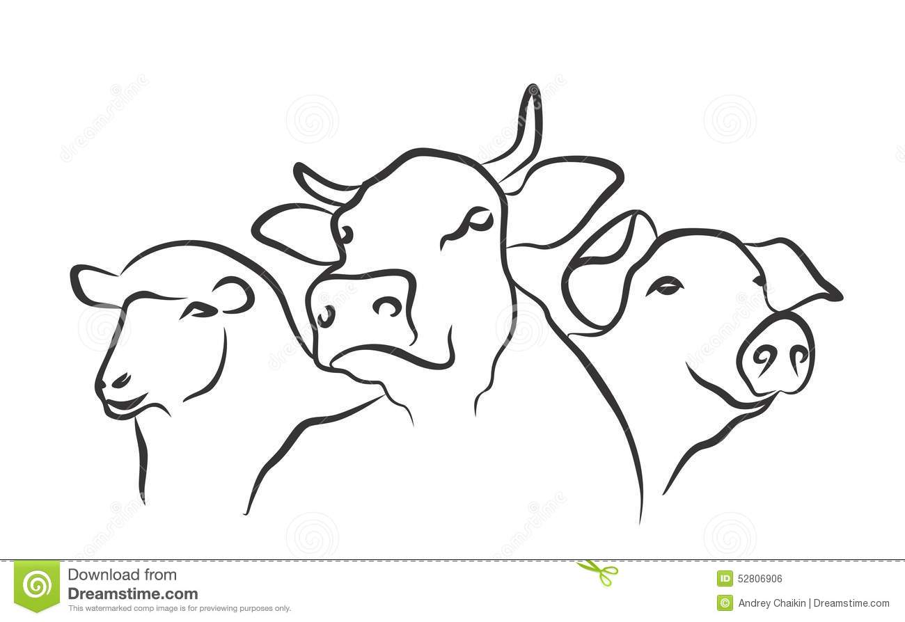 Logo Farm Stock Vector Illustration Of Mutton Vector