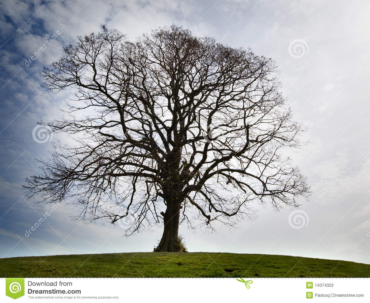 A Lonely Bare Tree Stock Photo Image Of English Twig