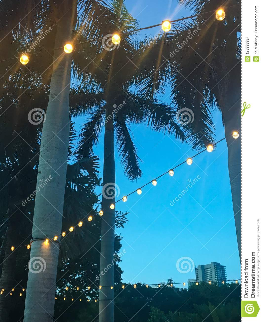 https www dreamstime com looking up palm trees decorated string lights outdoor patio south florida close up outdoor lights image123993937