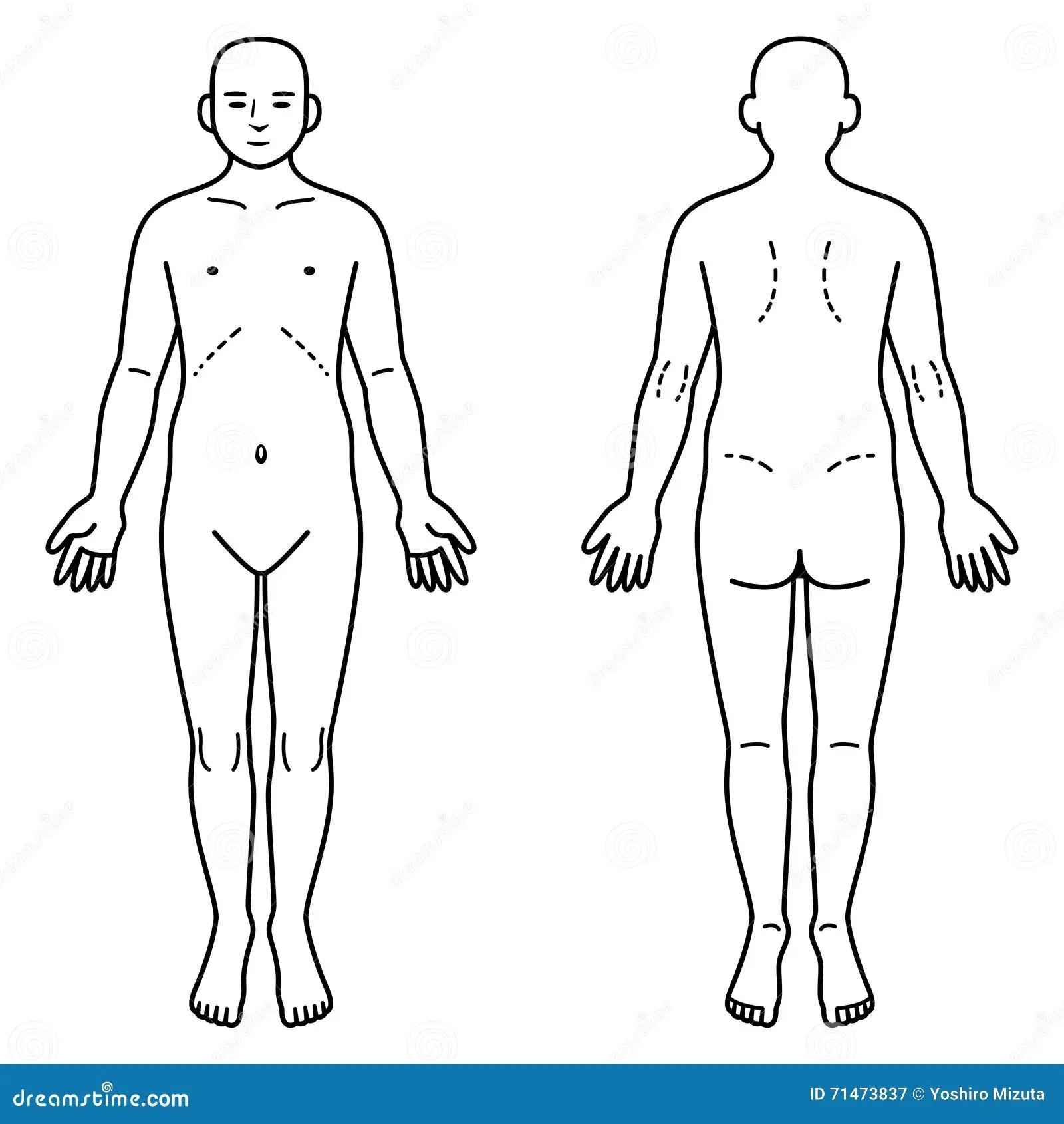 Manniskokroppframdel Och Baksida Vektor Illustrationer