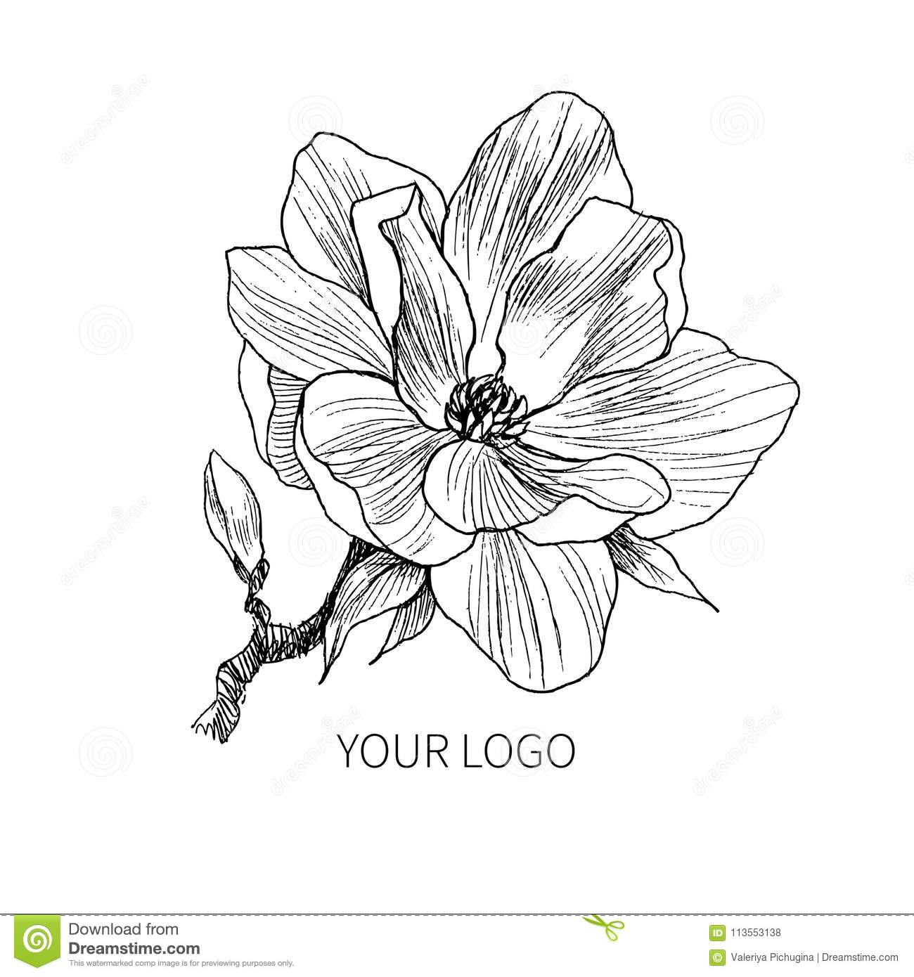 Ink Pencil The Leaves And Flowers Of Magnolia Isolate Line Art Transparent Background Hand