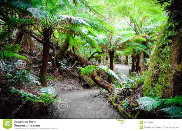 Maits Rest Rainforest Trail On Great Ocean Road, Australia ...