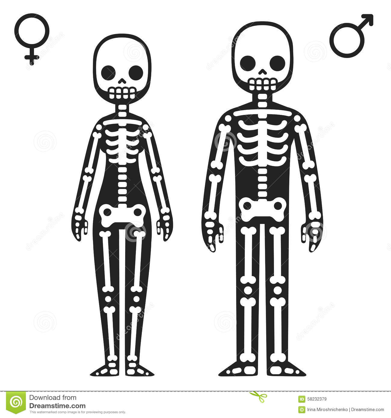 Male And Female Skeletons Stock Vector Illustration Of