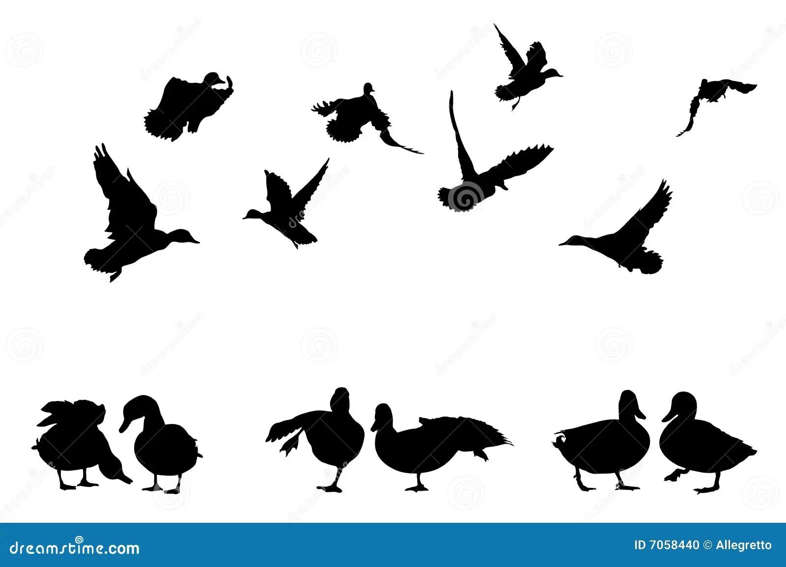 Mallard Duck Silhouettes Stock Illustration Illustration