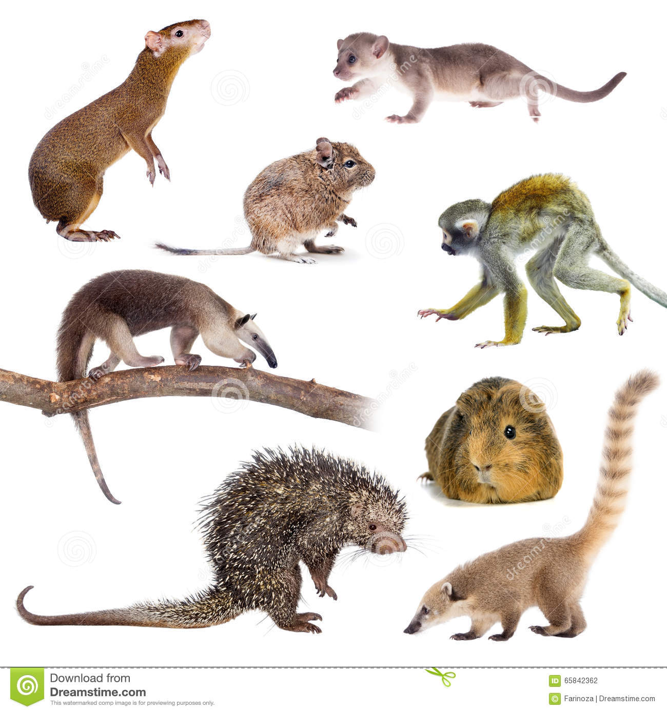 Mammals Of South America On White Stock Photo