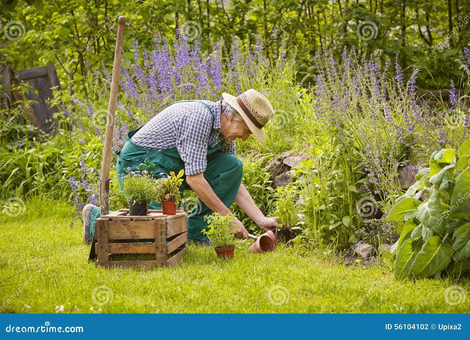 Man gardening stock photo. Image of straw, gardener ... on Gardening  id=88864