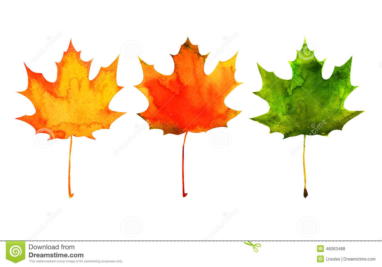 Maple Leaf In Red Yellow Green Colors Stock Photo
