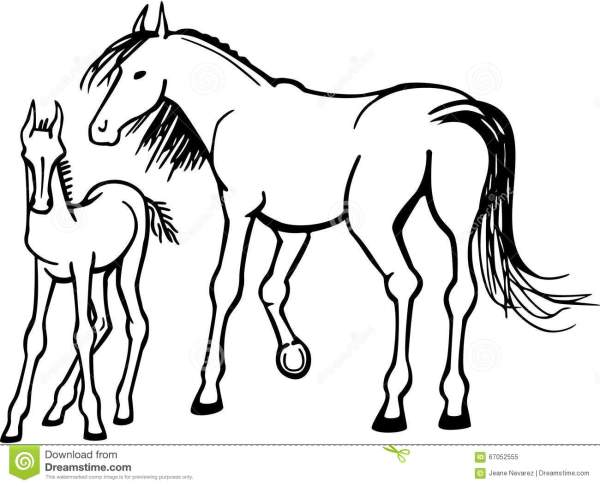 Mare and Foal stock vector Illustration of hoofed tail