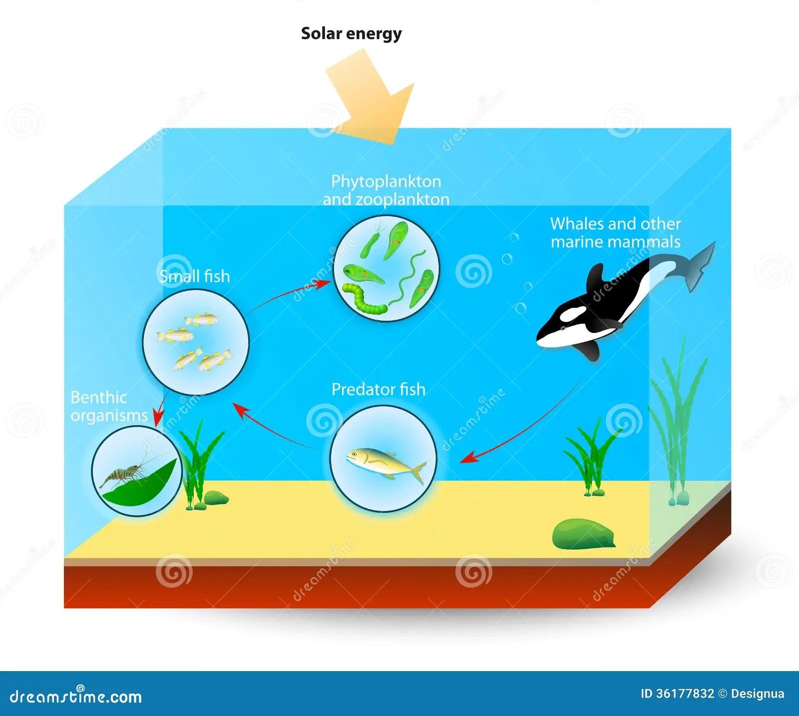 Marine Food Chain Or Food Web Stock Photography
