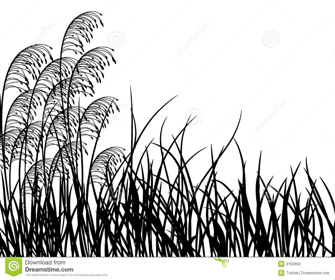 Meadow Grass Vector Stock Photo