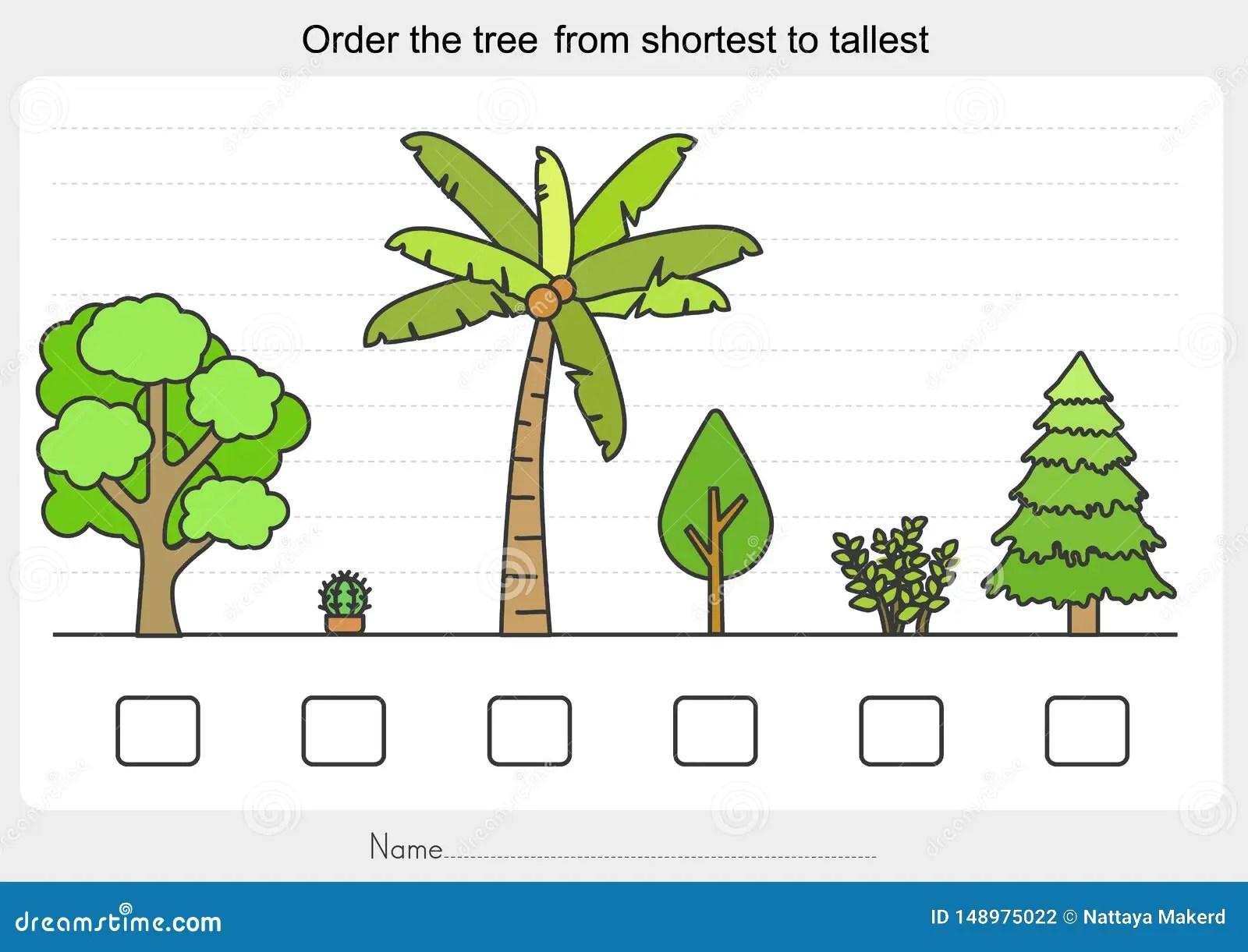 Measurement Worksheet