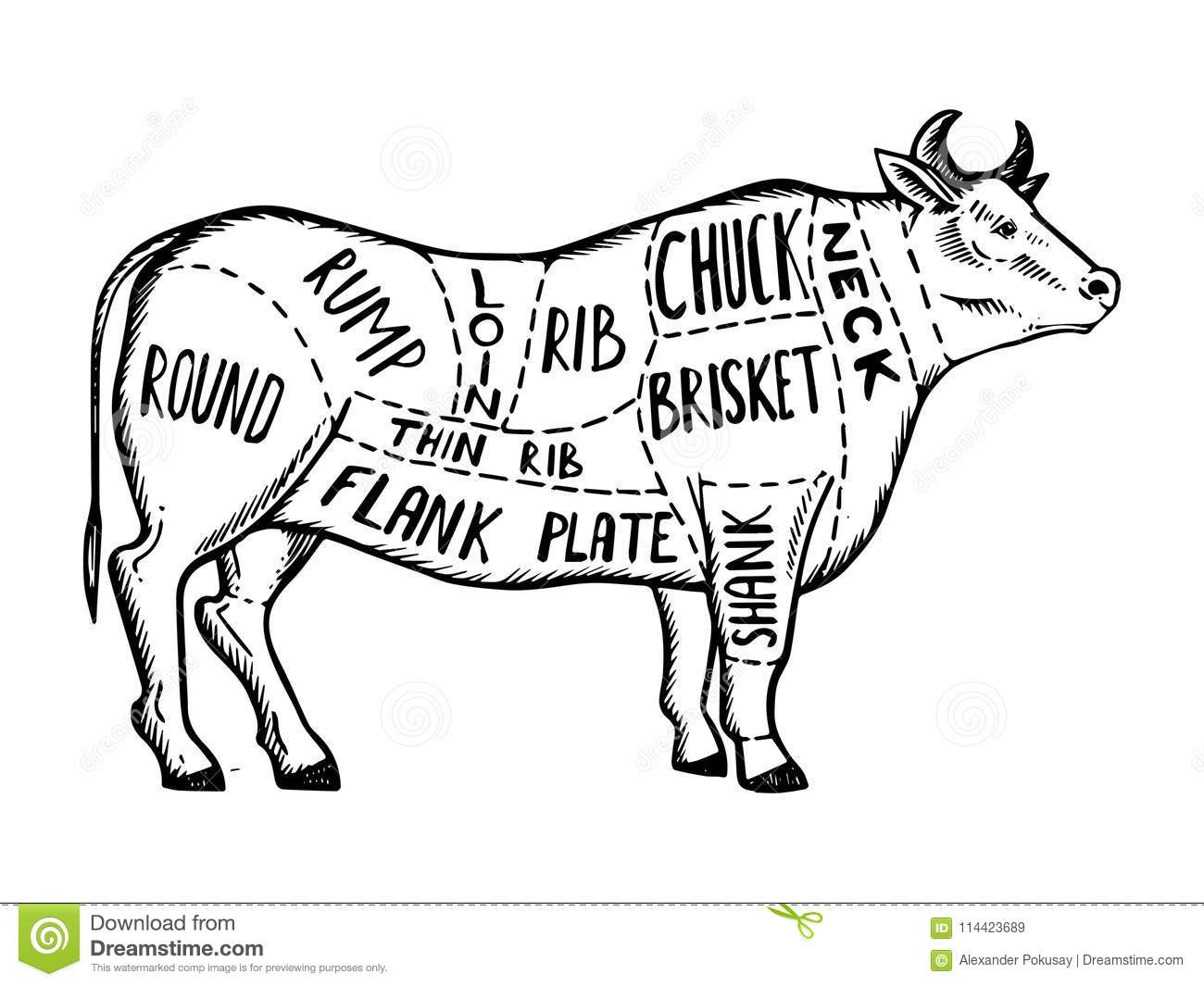 Meat Diagram Cow Engraving Vector Stock Vector