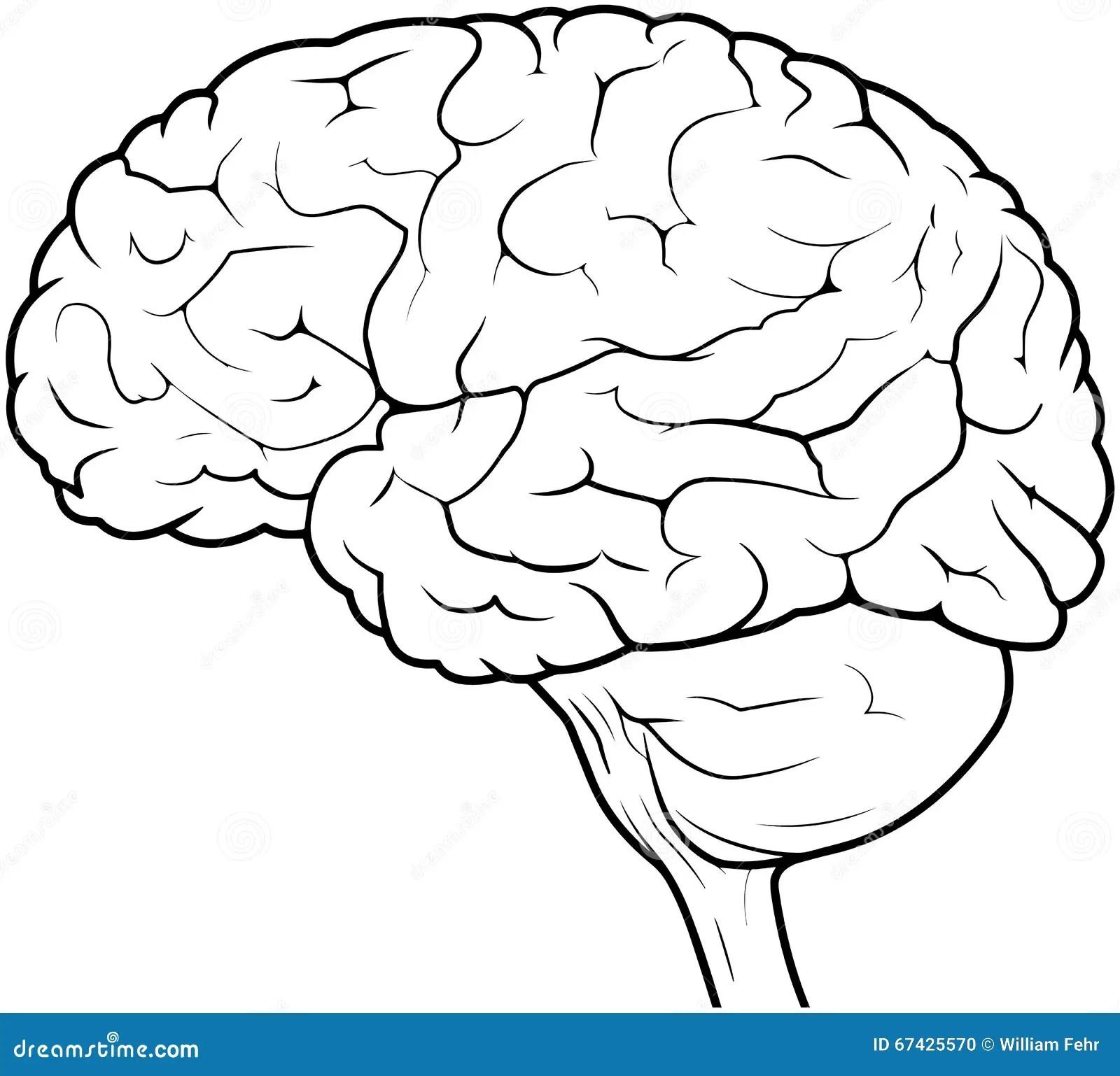 Mensch Brain Drawing Stock Abbildung Illustration Von
