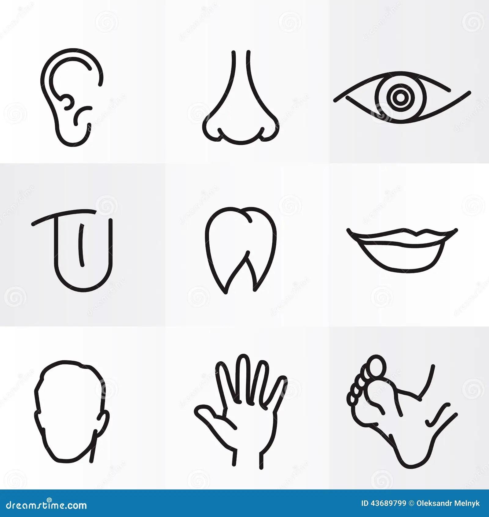 Menselijke Lichaamsdelen Stock Illustratie