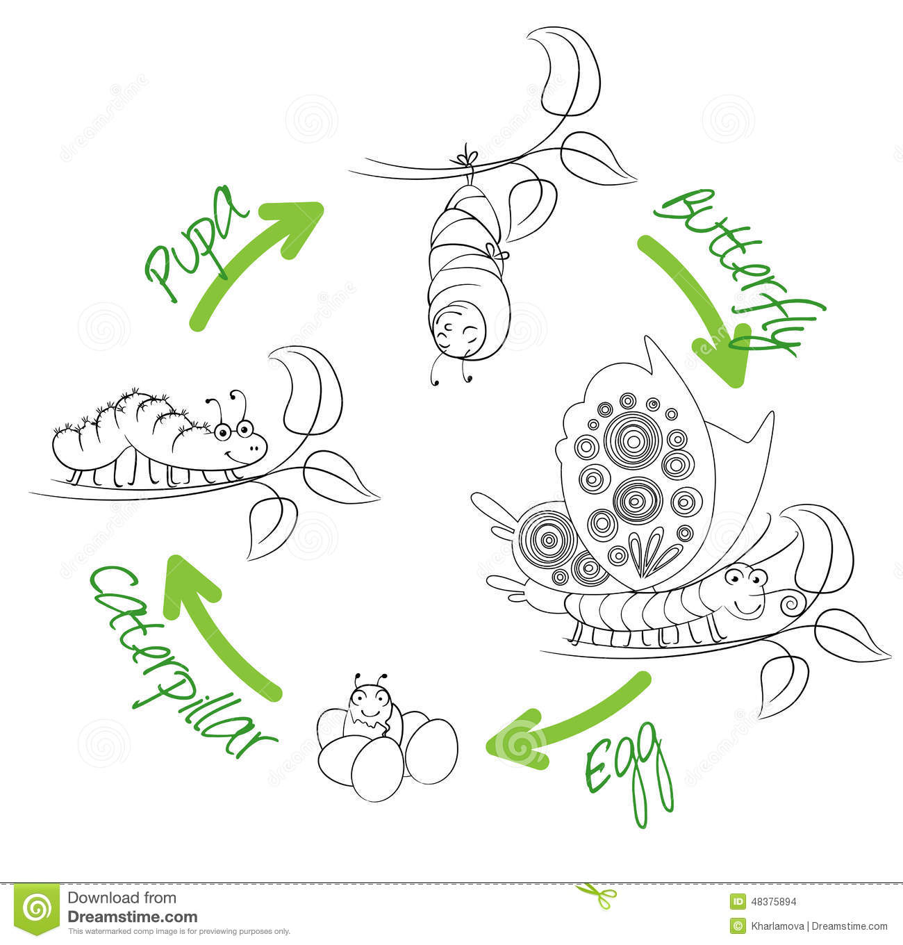 The Metamorphosis Of The Butterfly Stock Vector