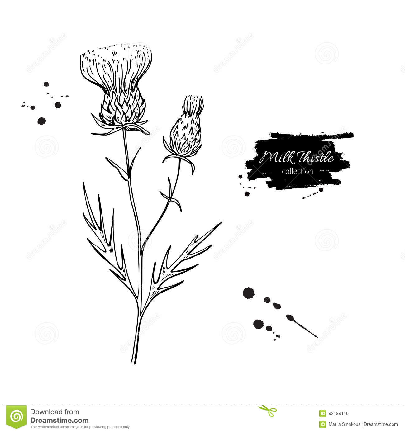 Milk Thistle Flower Vector Drawing Set Isolated Wild