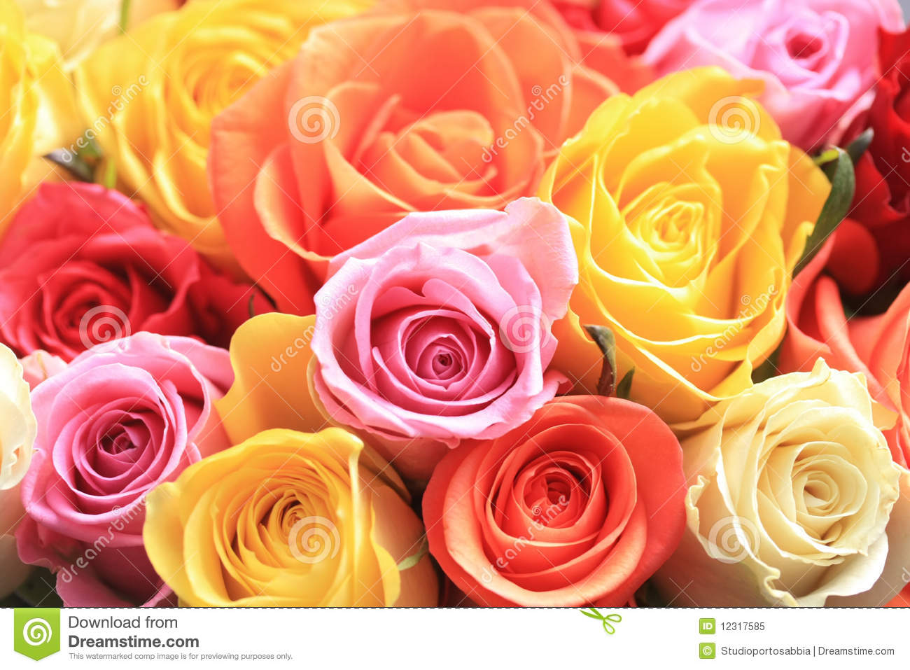 Mixed Rose Bouquet Royalty Free Stock Photo Image 12317585