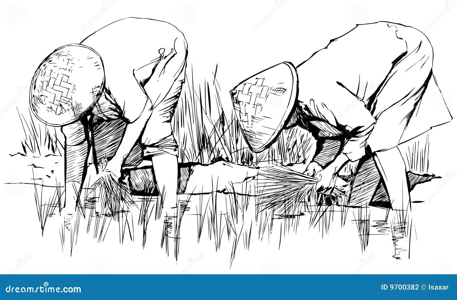 Moisson Du Riz En Asie Illustration De Vecteur