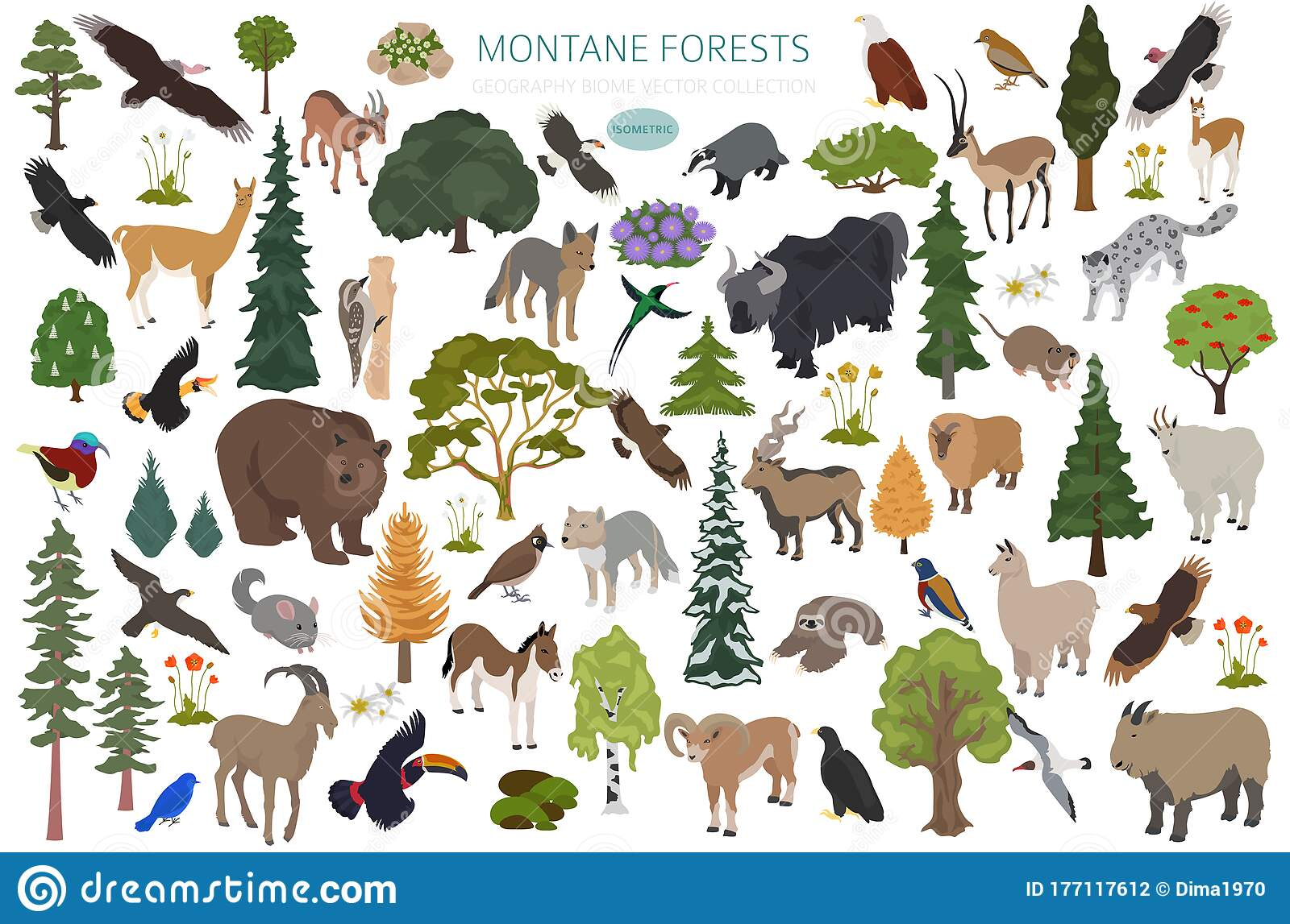 More than 300 vertebrate species are associated with western forests of oregon and washington (table 1). Montane Forest Biome Natural Region Infographic Isometric Version Terrestrial Ecosystem World Map Animals Birds And Stock Vector Illustration Of Climate Condor 177117612