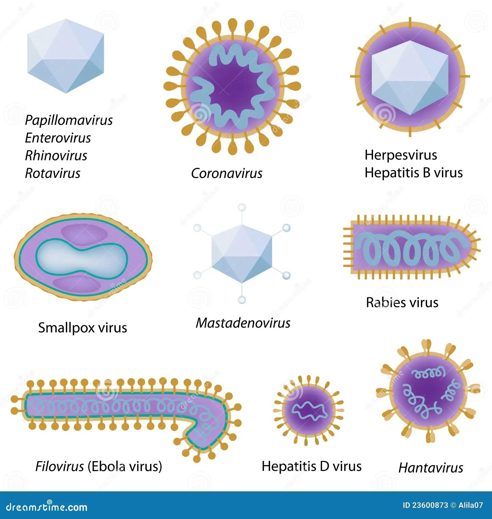 Morphology Of Common Viruses Stock Photos