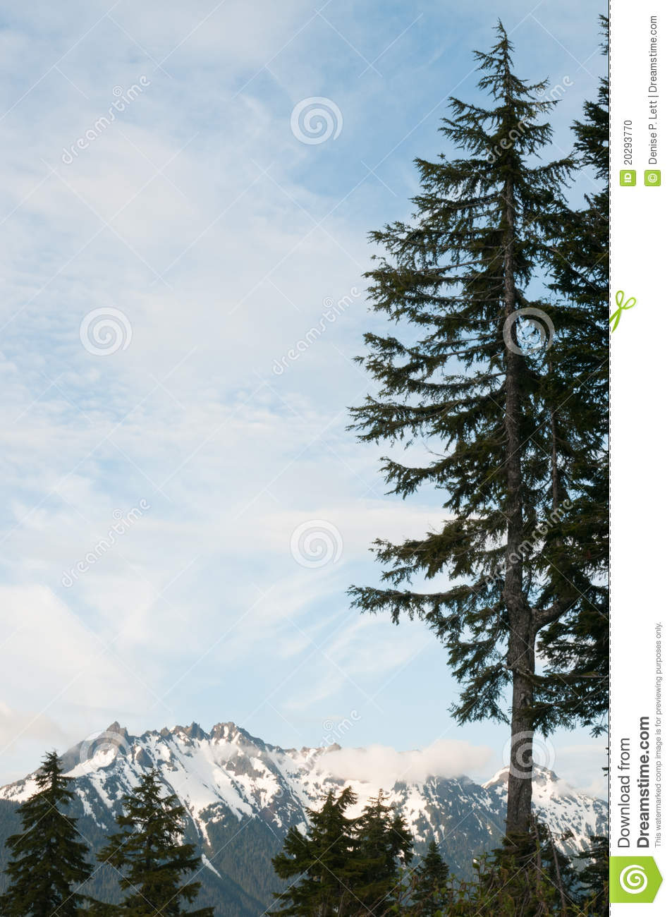 Mountain Peaks And Evergreen Trees Stock Photo Image