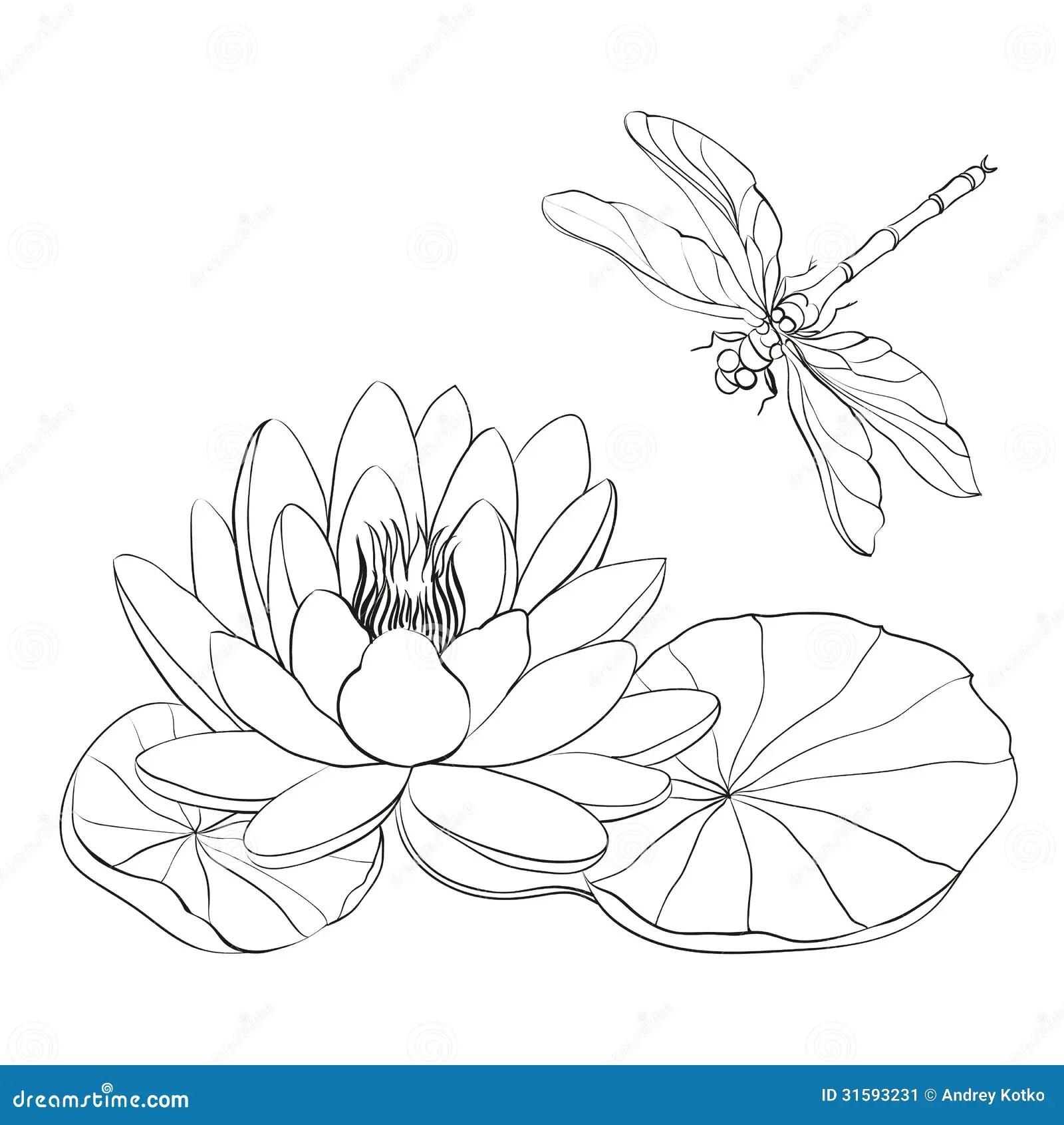 Nenuphar Et Libellule Illustration De Vecteur