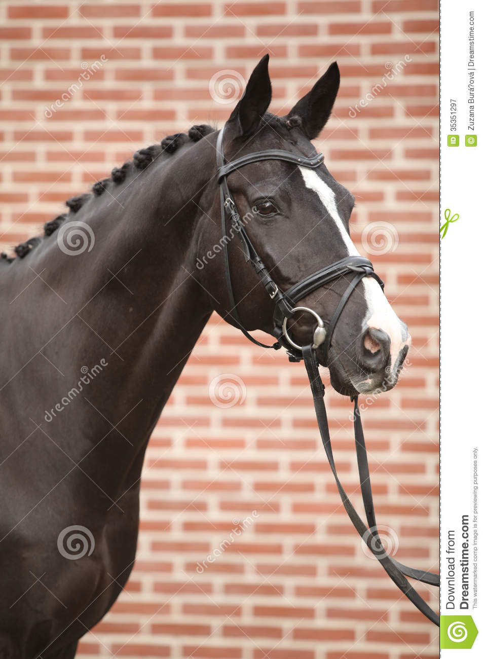 Nice Big Horse With Perfect Hair Style Stock Image Image