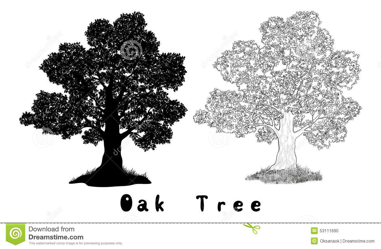 Oak Tree Silhouette Contours And Inscriptions Stock