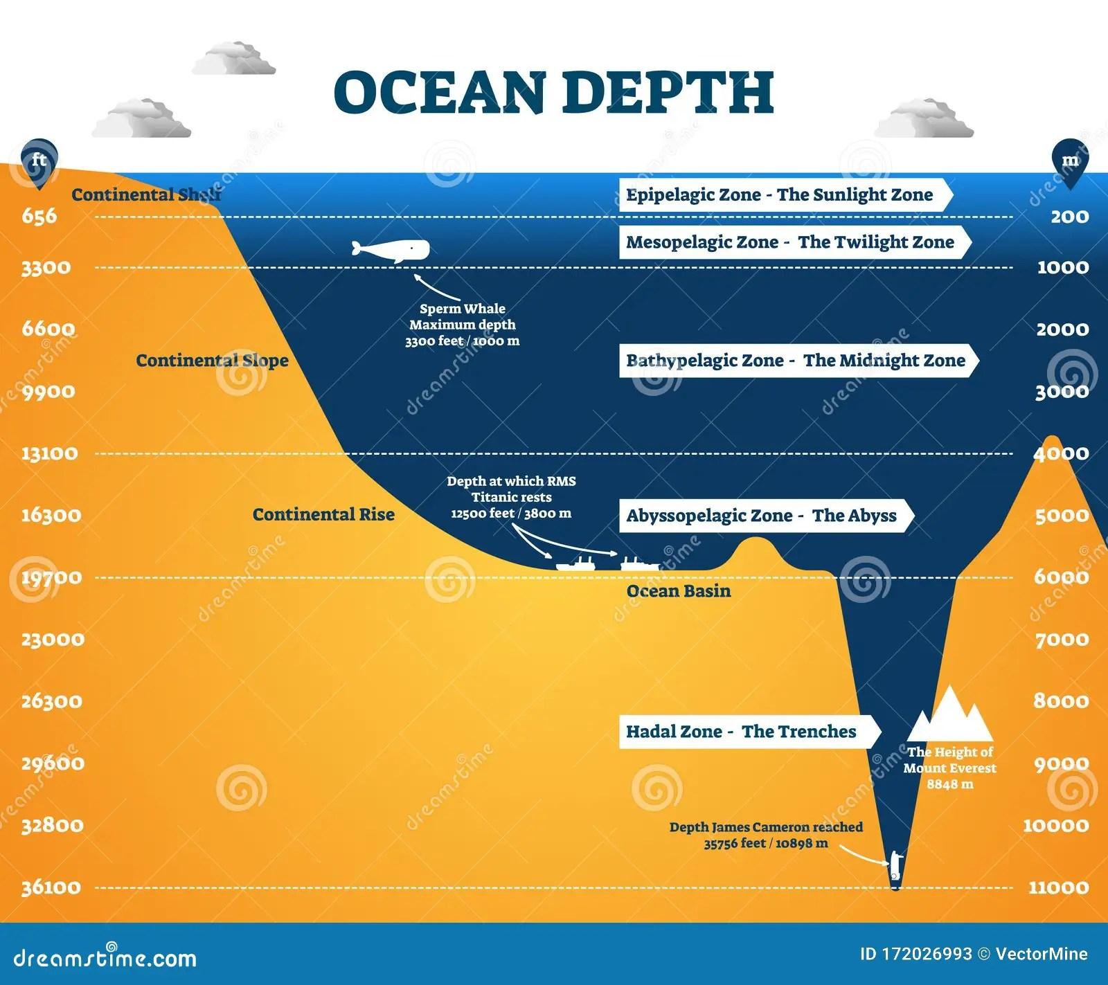 Ocean Depth Zones Infographic Vector Illustration Labeled