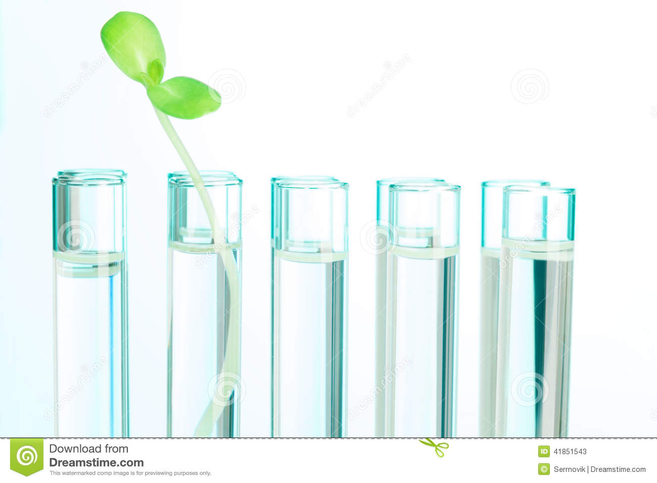 One Green Plant In Test Tube Filled With Water Stock Photo