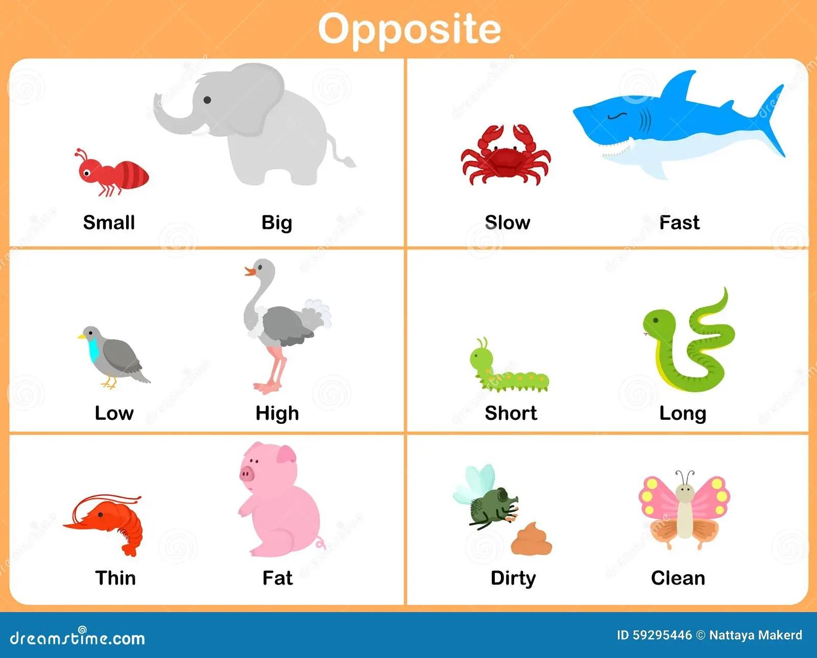 Oposto Com Os Animais Para O Pre Escolar
