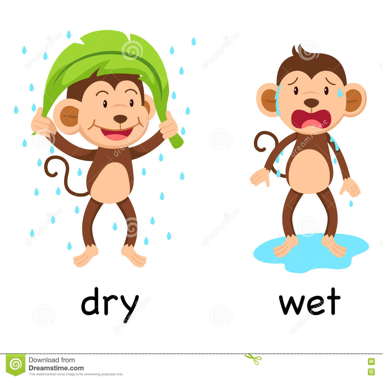 Opposite Words Dry And Wet Stock Vector Illustration Of