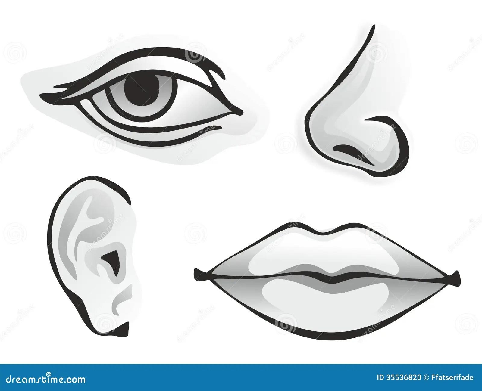 Organes Sensoriels Illustration Stock Illustration Du