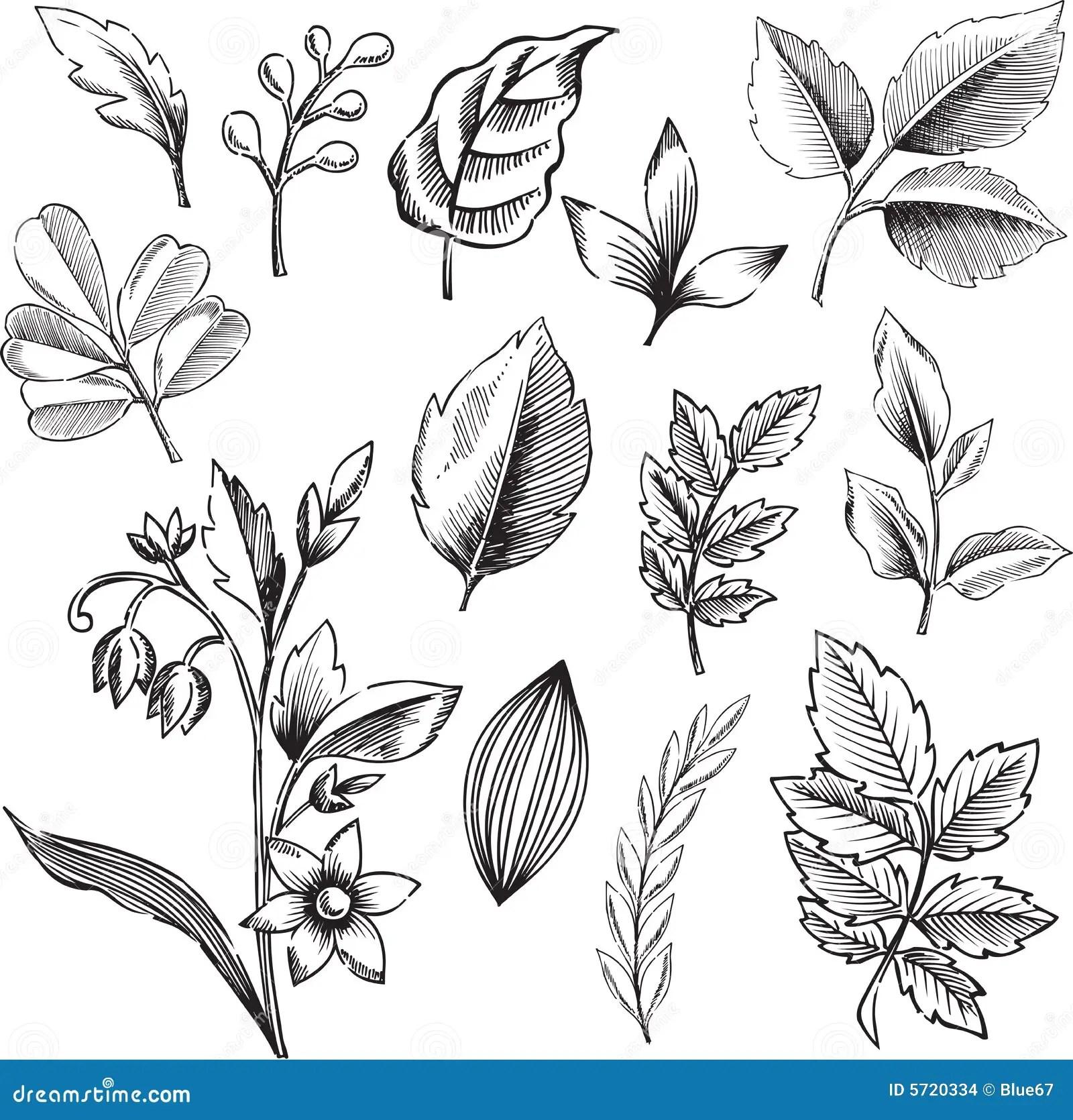Ornamental Leaves Vector Illustration Stock Vector