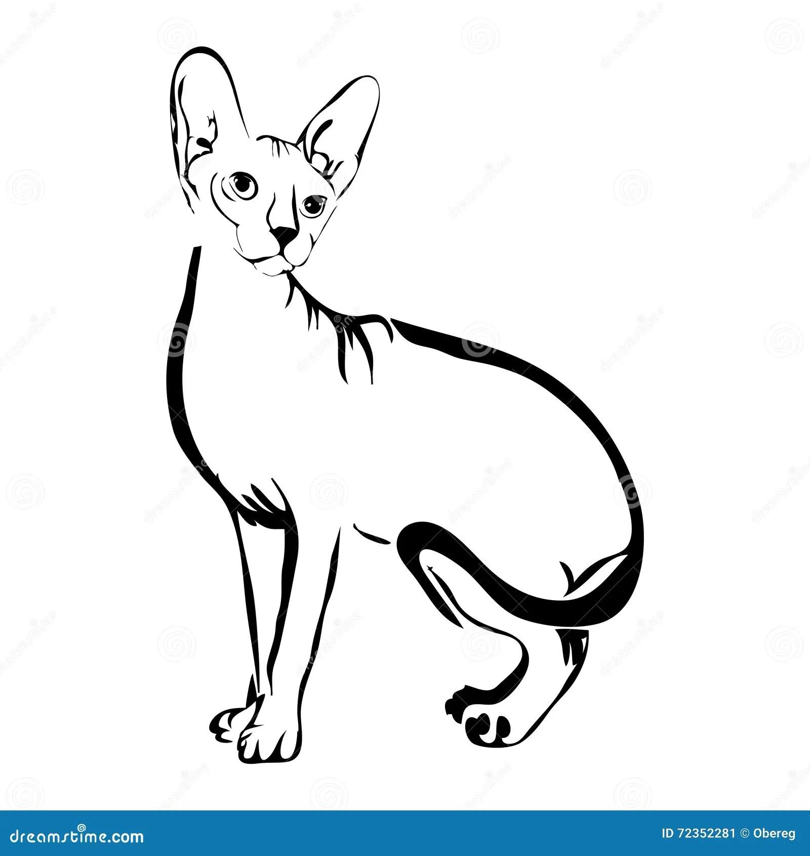 Outline Cat Sphynx Vector Illustration Stock Vector