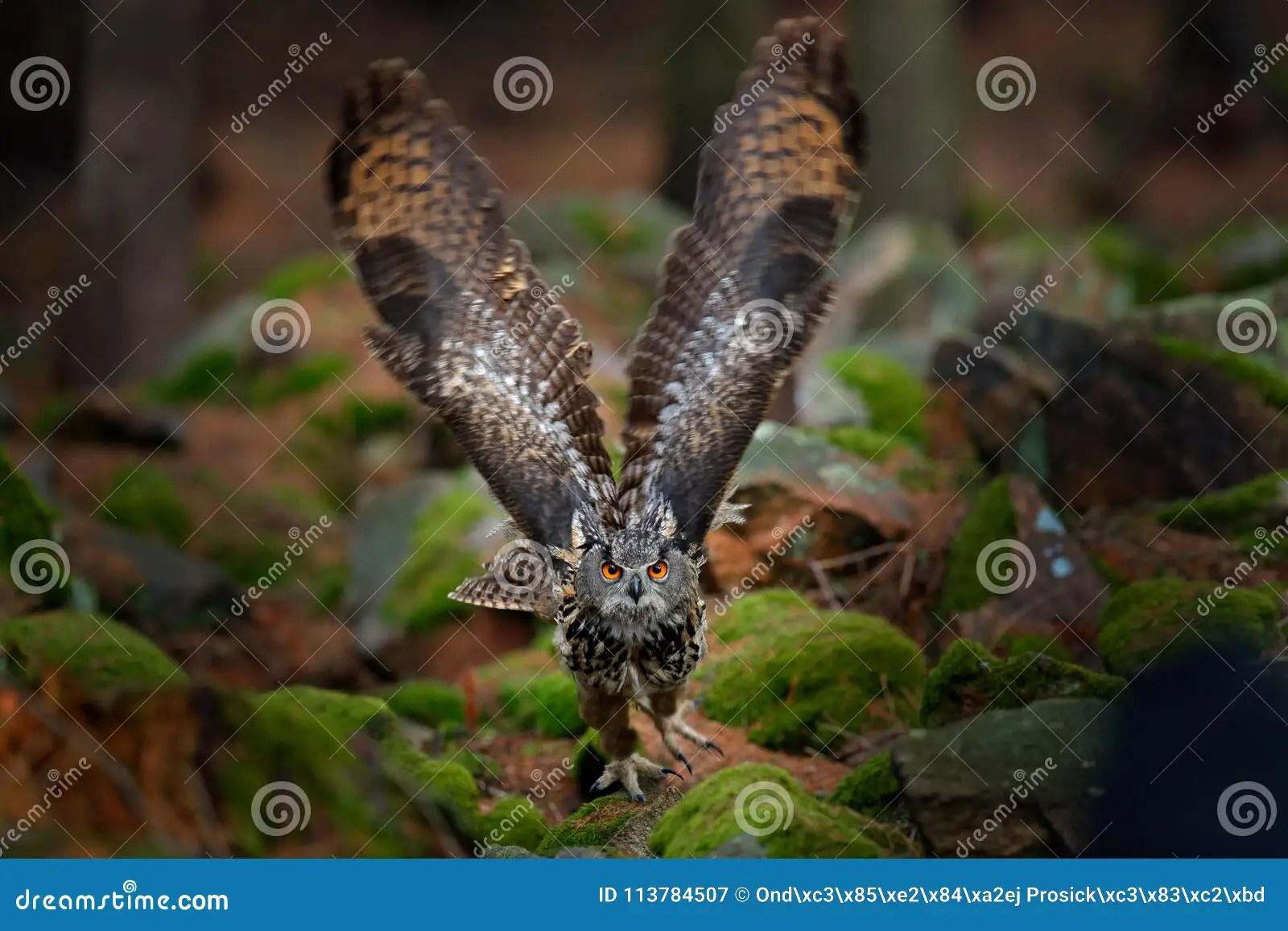 Owl In Forest Habitat Stone Hill Flying Eurasian Eagle