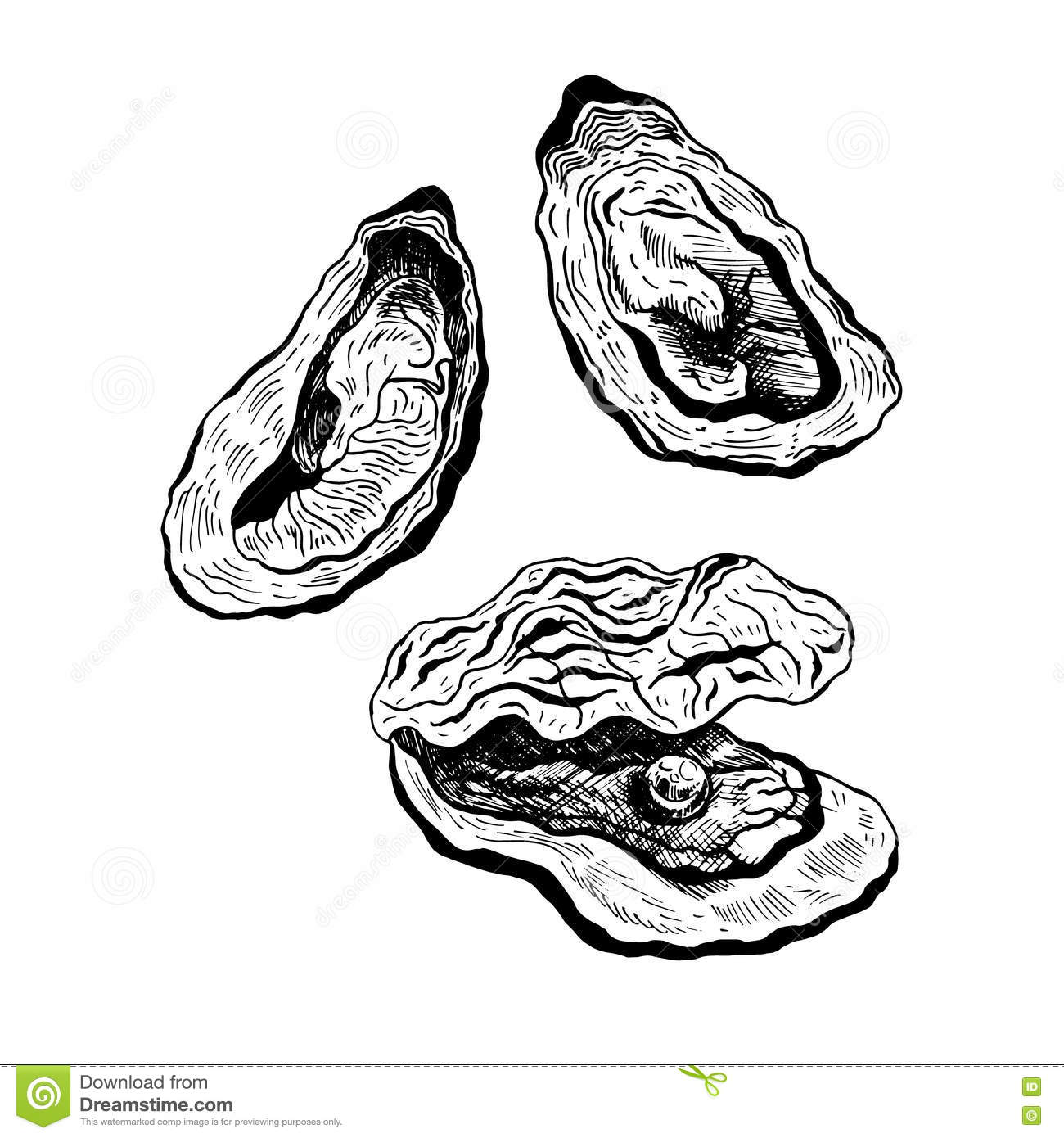 Oysters Vintage Vector Set Stock Vector