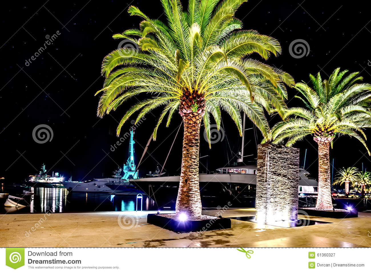 Palm Trees In The Night Lights In Marina Porto Montenegro