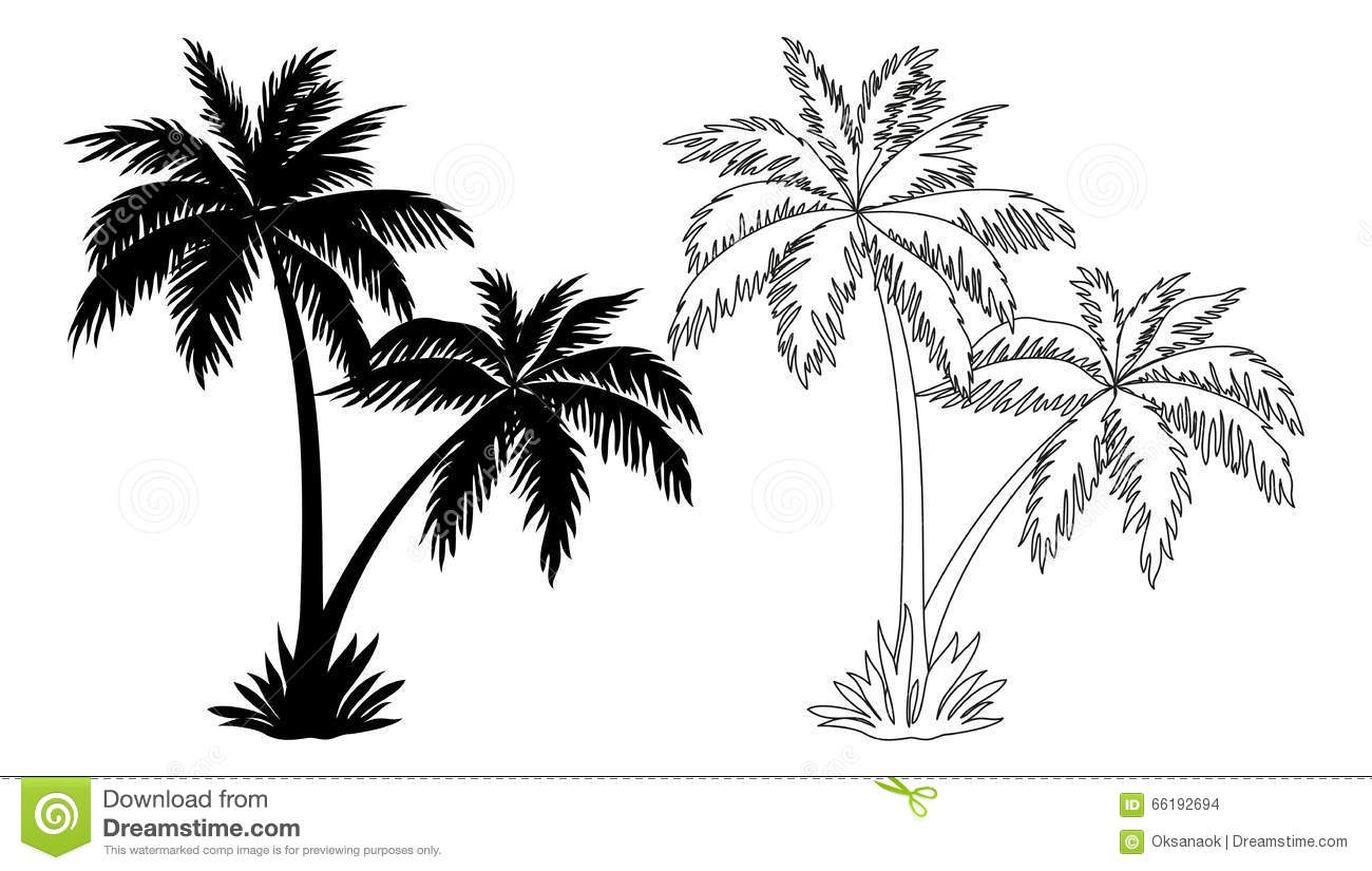 Palm Trees Silhouettes And Contours Stock Vector