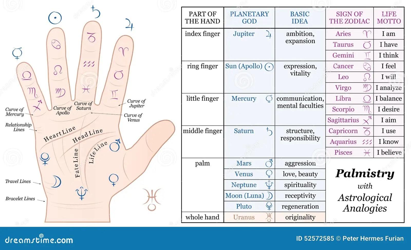 Palmistry Astrology Basicogies Chart Stock Vector