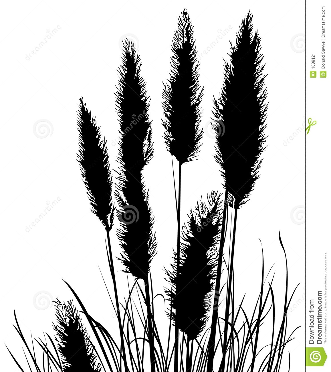 Pampas Grass Silhouette Stock Vector Illustration Of