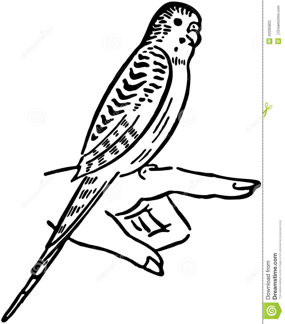 Parakeet Stock Vector Illustration Of Drawings Clipart