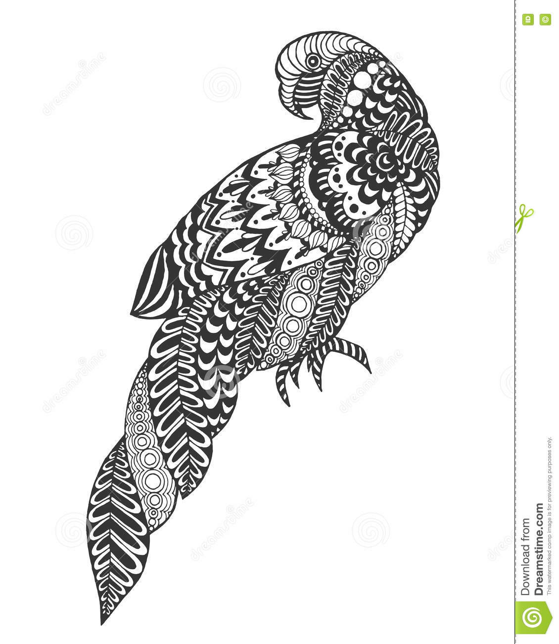 Parrot Stock Vector Illustration Of Drawing Clipart