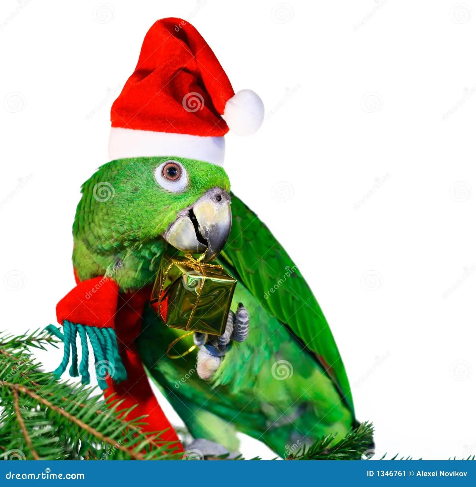 Parrot Santa Stock Image Image 1346761