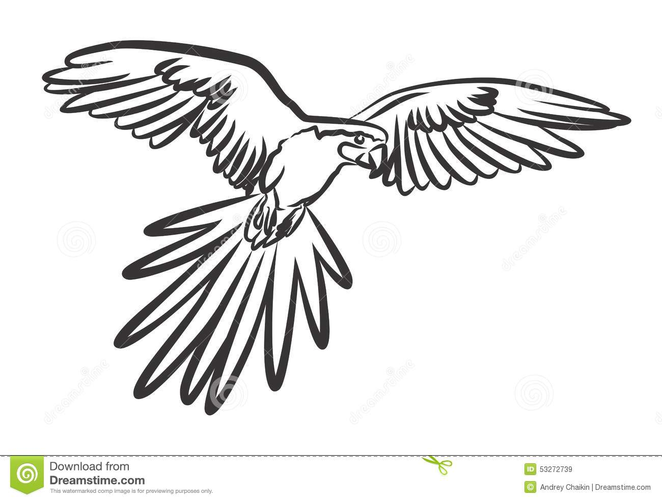 Parrot Stock Vector Illustration Of Prey Drawing