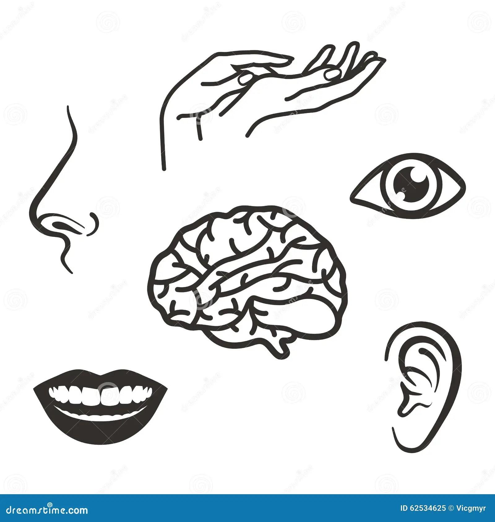 Cartoon Face Parts Vector Illustration