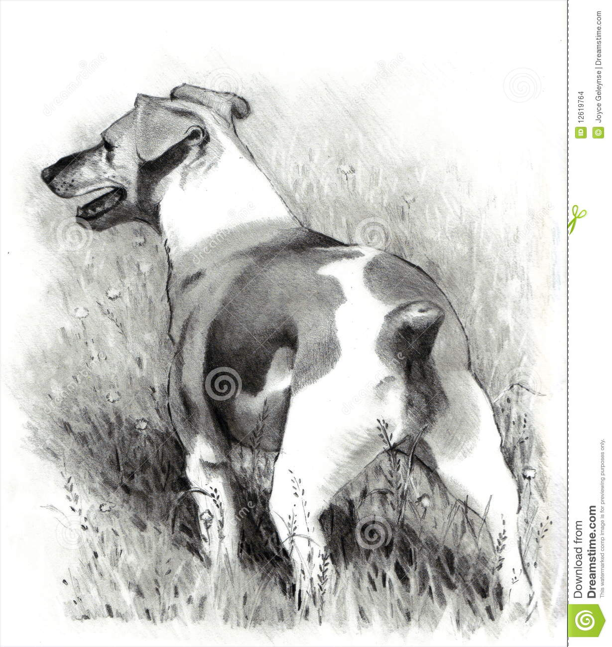 Pencil Drawing Of Jack Russell Terrier Dog Stock Images