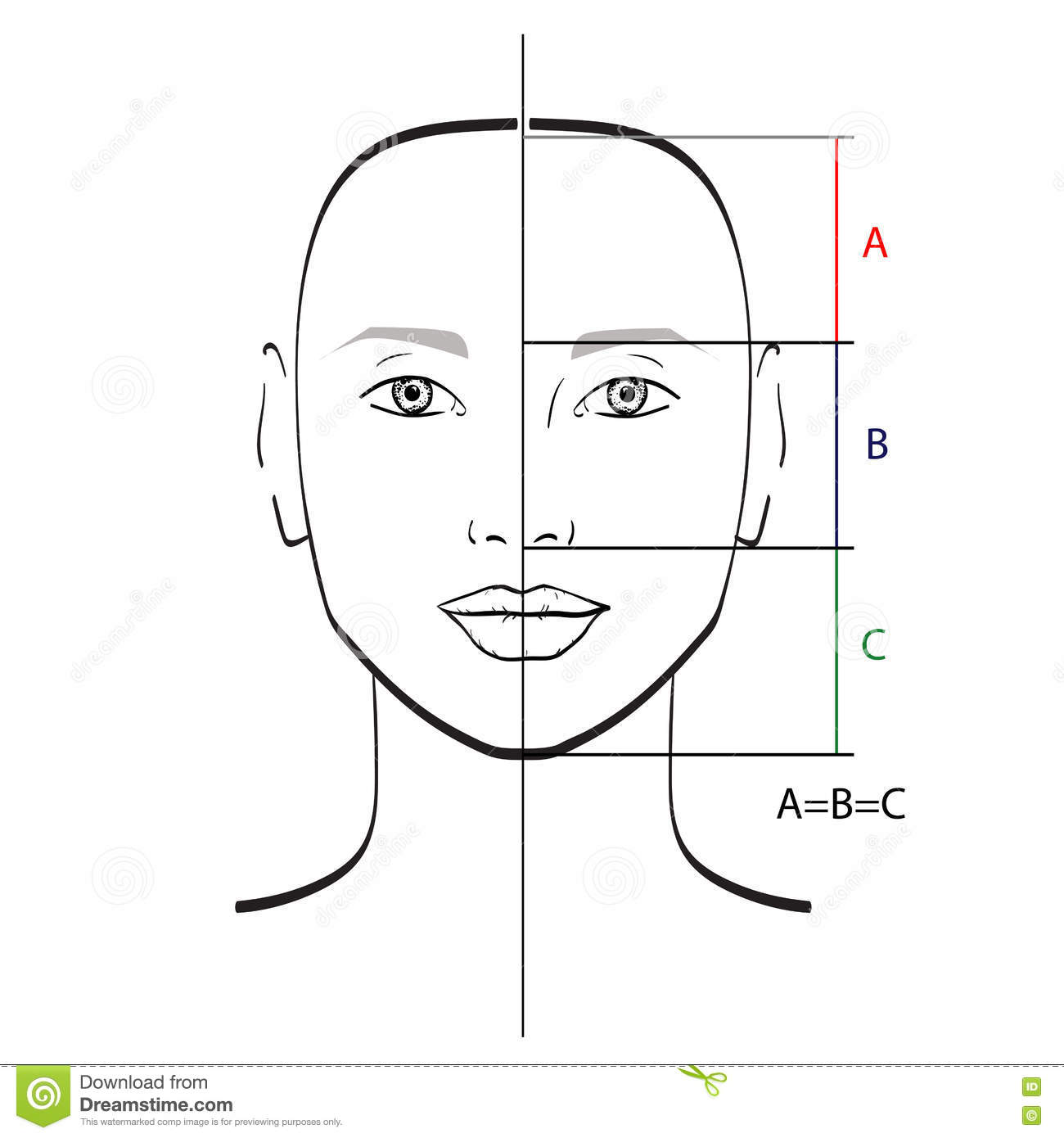 Perfect Face Proportions Stock Illustration Illustration